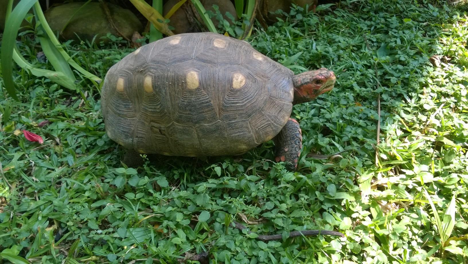 tartaruga_posição_sul_hemisferio_sul