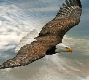 águia1