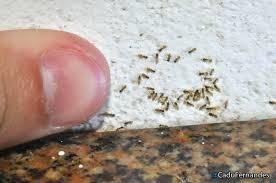 acucar_formigas