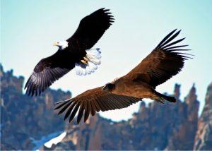 Águia e Condor Representam a sabedoria do H. Norte e Sul unidas